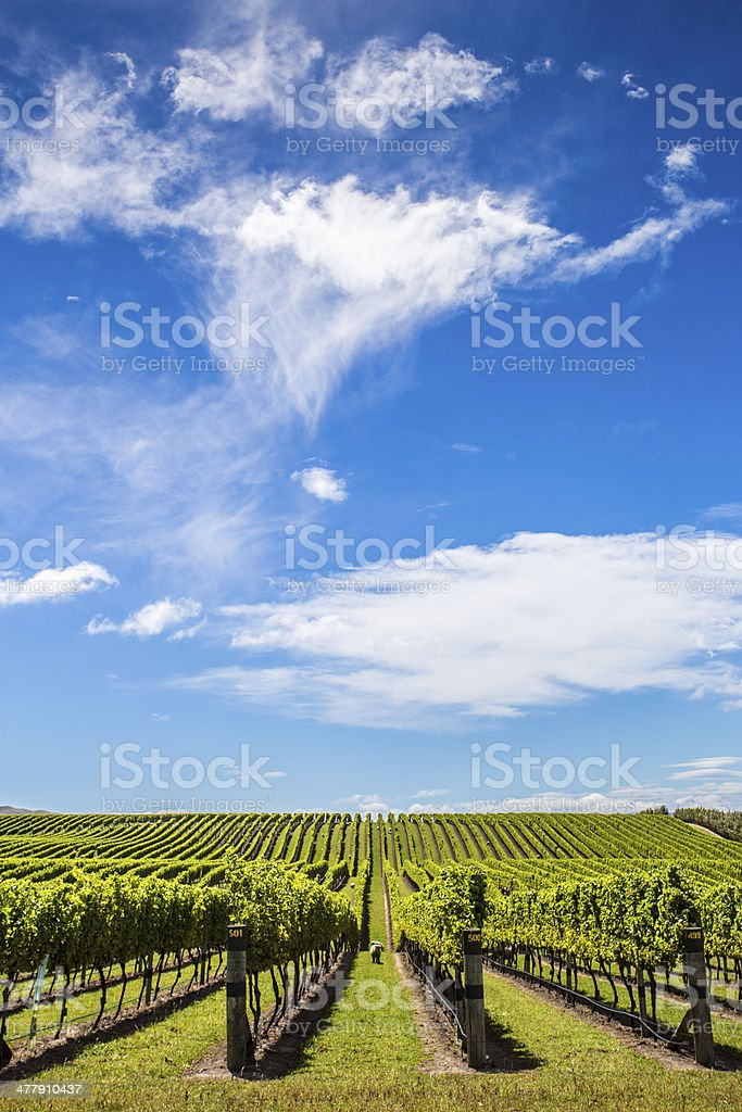 Wine ranks stock photo