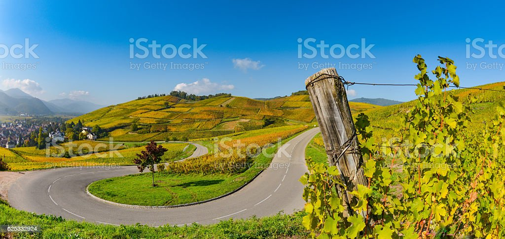 Wine Road, Vineyards of Alsace in France - foto stock