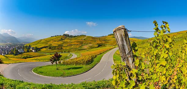 Wine Road, Vineyards of Alsace in France - foto stock