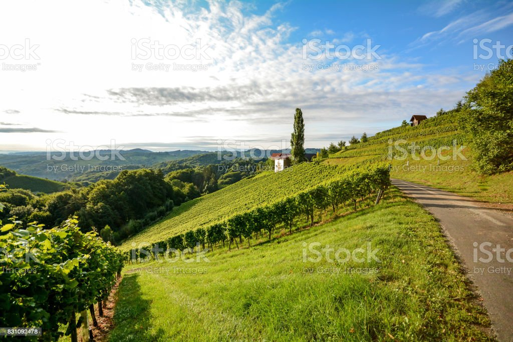 Wine route through steep vineyard next to a winery in the tuscany wine growing area, Italy Europe stock photo
