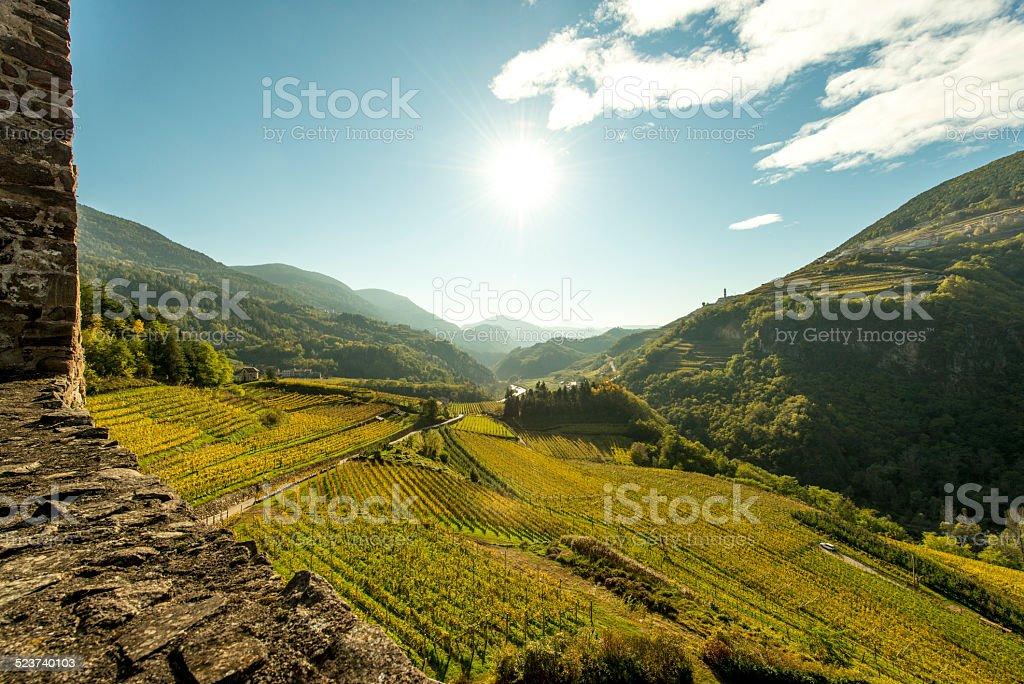 Wine terraces in Cembra Valley (Trentino) viewed from Castello di_Segonzano stock photo
