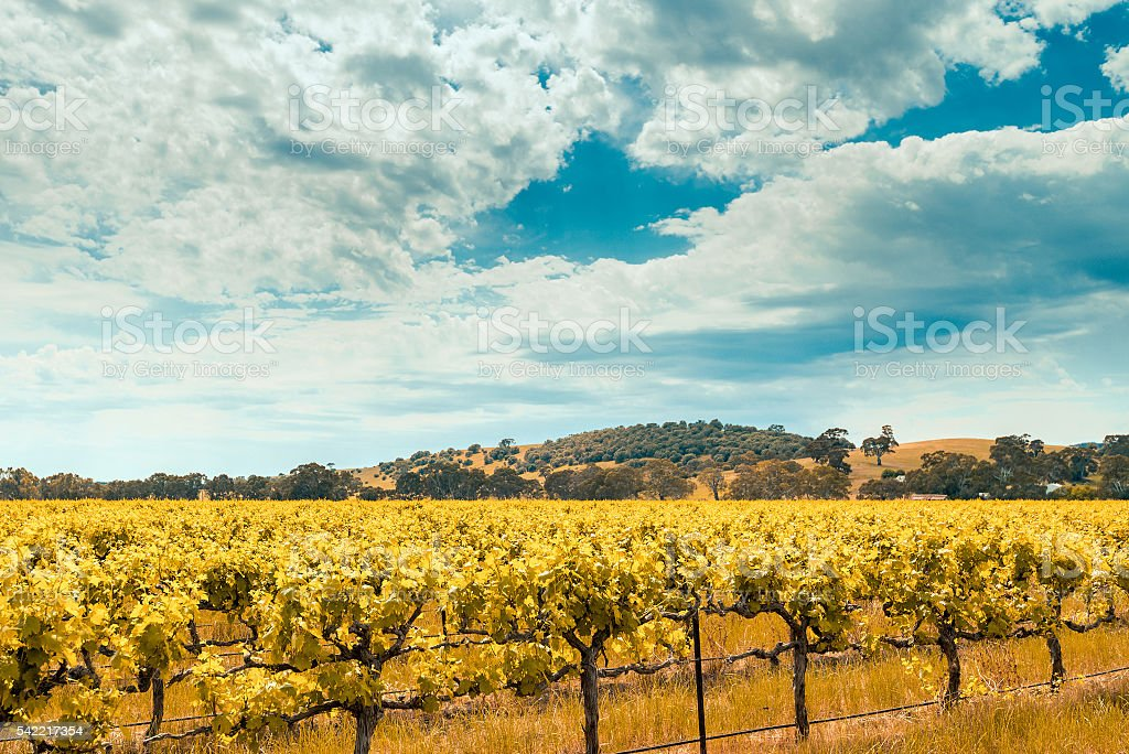 Wine valley in Barossa, South Australia stock photo