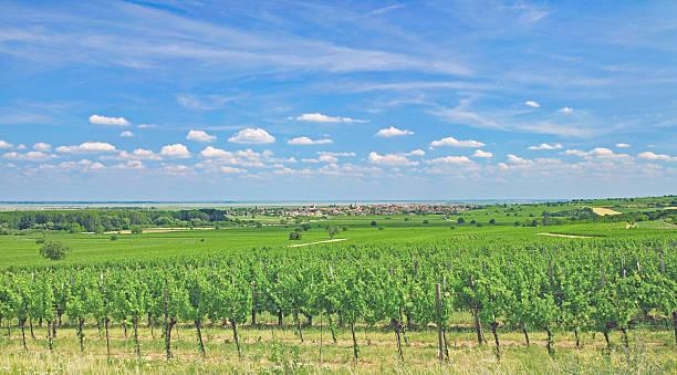 wine village of rust,neusiedlersee,burgenland,austria - burgenland stock-fotos und bilder