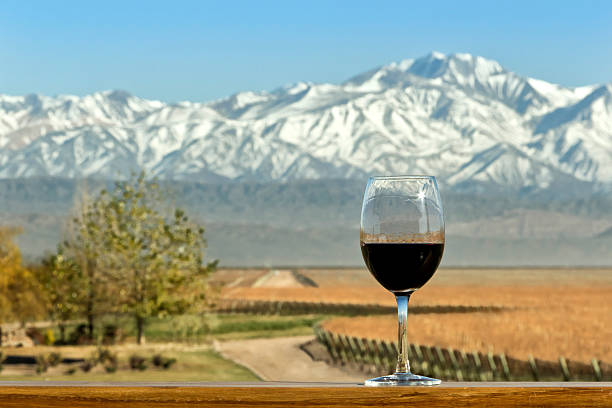Wine, vineyard and mountain stock photo