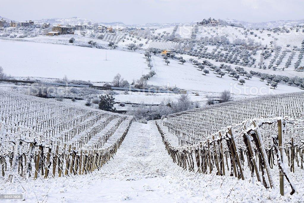 Zima vineyard – zdjęcie