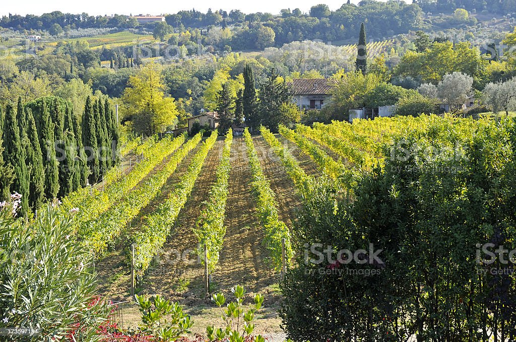 Wine Yard royalty-free stock photo