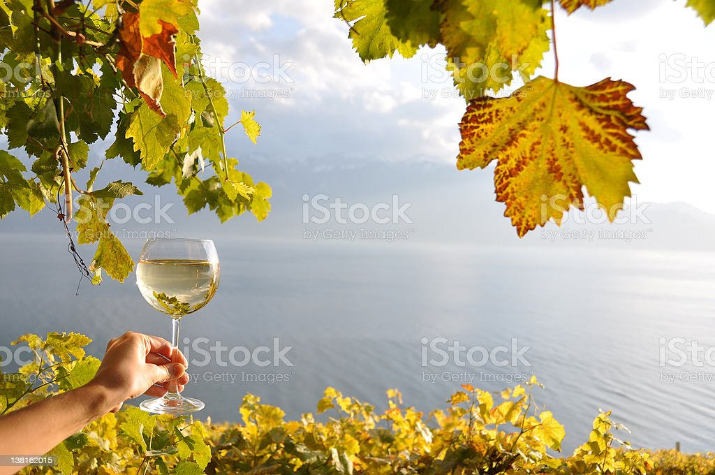 Wineglases in the hand royalty-free stock photo