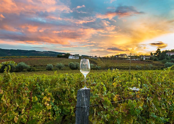 wineglass in a vineyard during a dramatic sunset wineglass in a vineyard during a dramatic sunset with colorful clouds and beautiful colorful grape vines. sonoma stock pictures, royalty-free photos & images