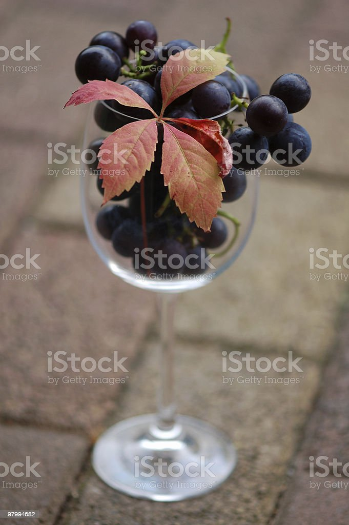 Wineglass with blue grapes royalty-free stock photo