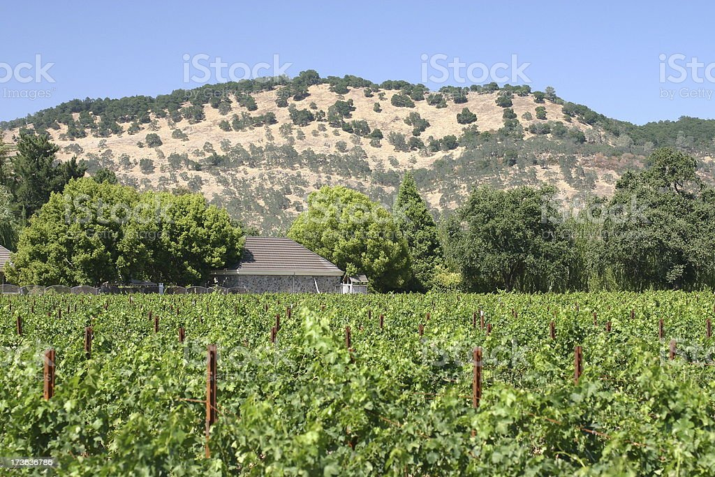 Wine-growing area royalty-free stock photo