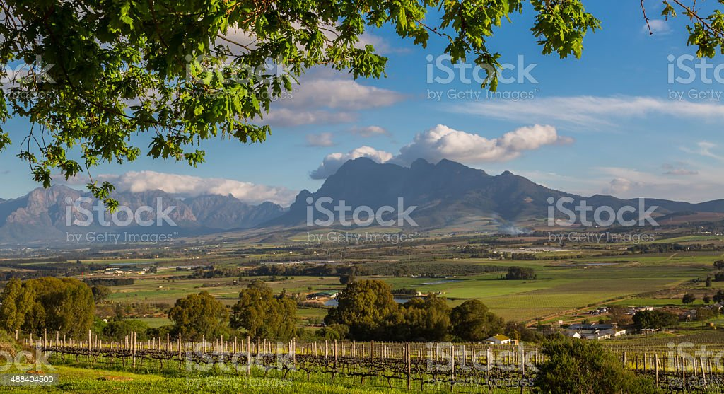 Winelands at the Cape stock photo