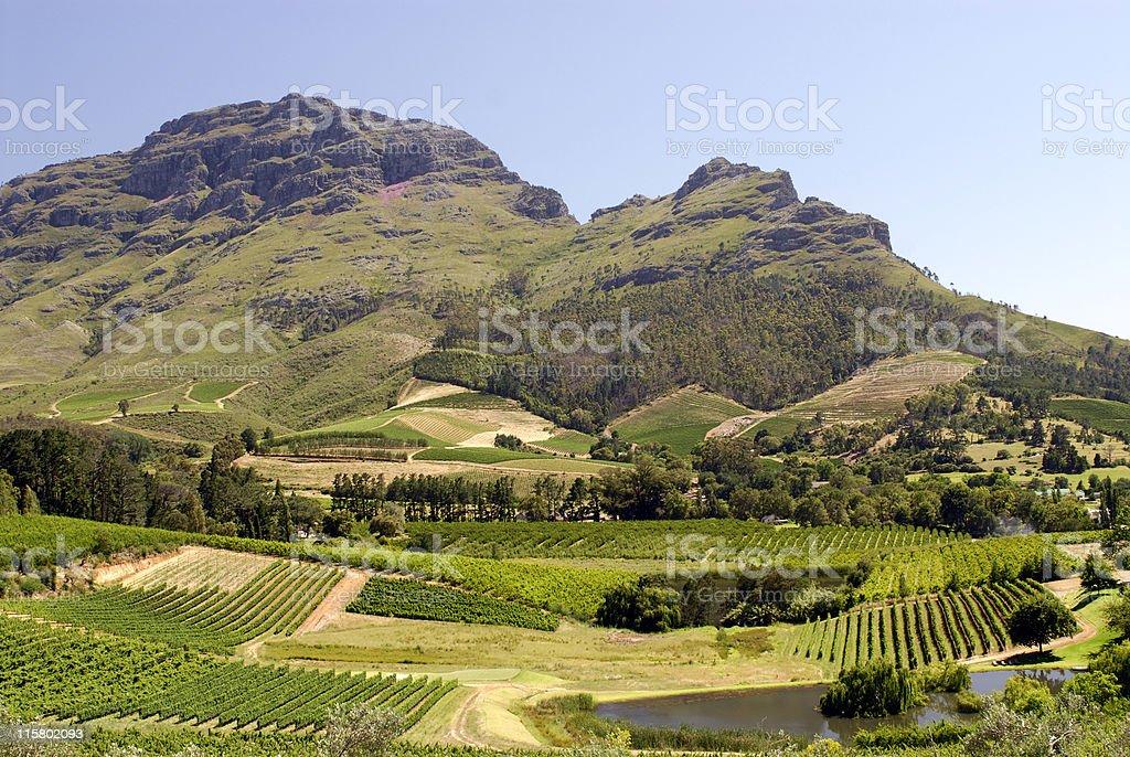 Winelands royalty-free stock photo