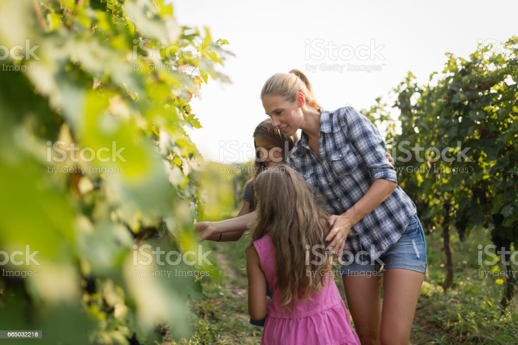 Winemaker family happy together in vineyard before harvesting stock photo