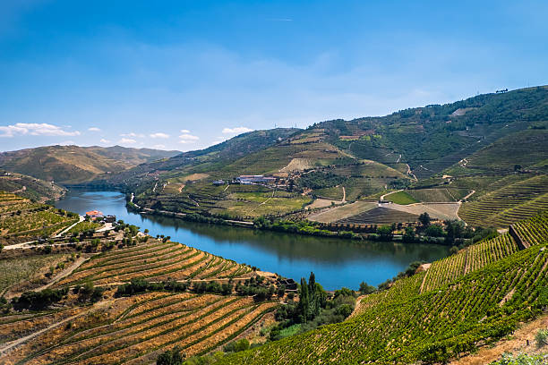 Wineries of Douro Picture of the Douro Valley with its river in the middle of the vineyards, place with many famous wineries in Portugal. duero stock pictures, royalty-free photos & images
