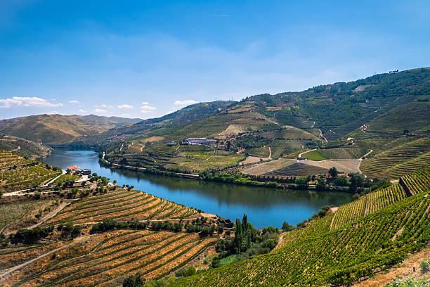 wineries of douro - douro imagens e fotografias de stock