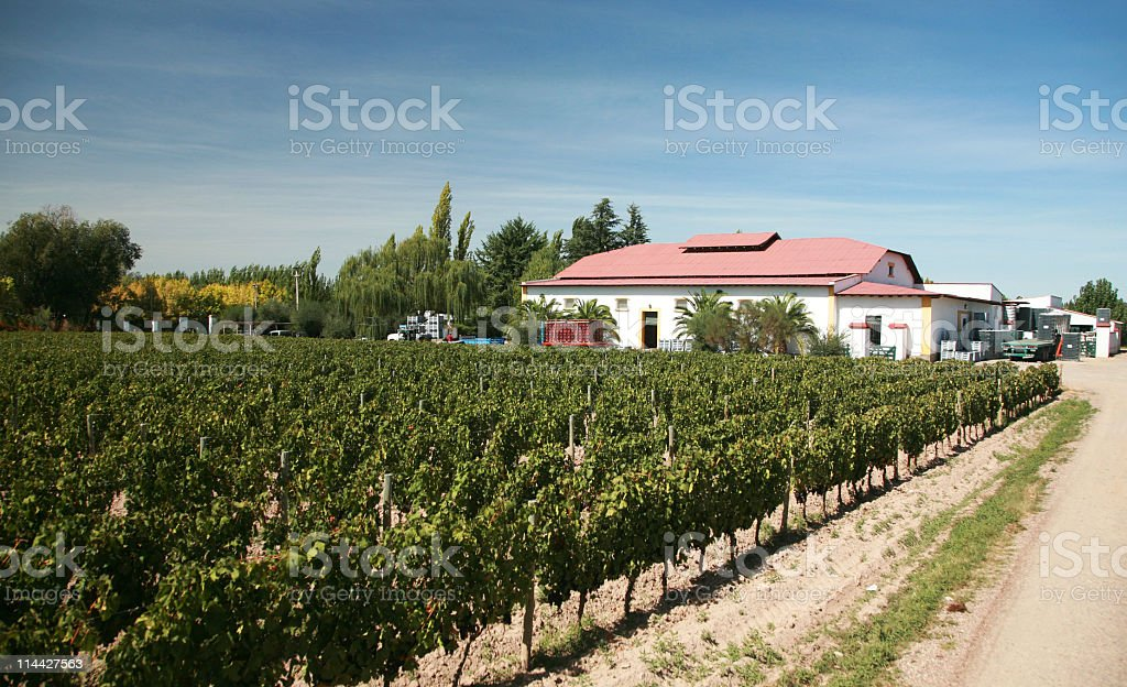 Winery and vineyards in Mendoza