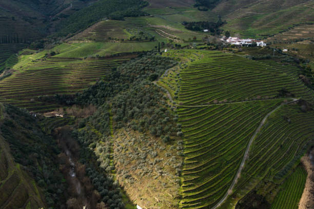 Weingut Gebiet Alto Douro – Foto