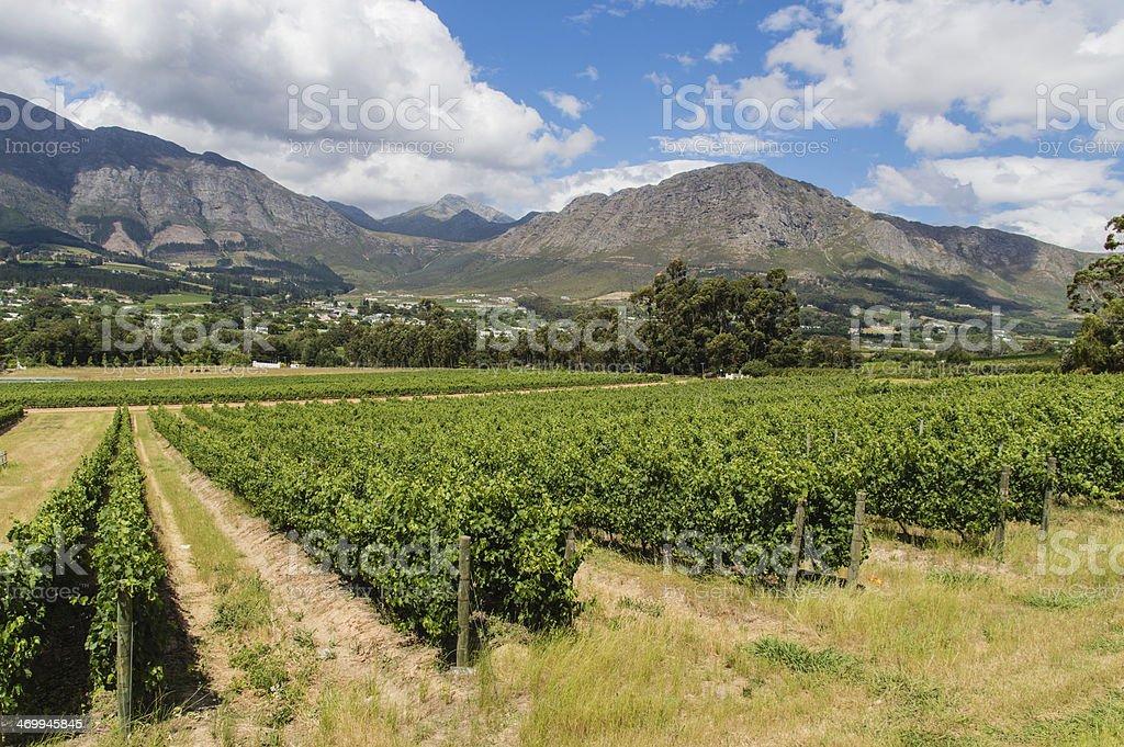 Winery Franschhoek royalty-free stock photo