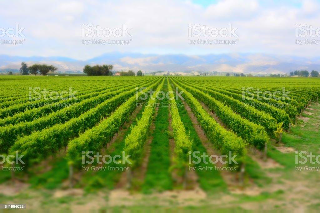 Winery in Marlborough Sounds, New Zealand. stock photo