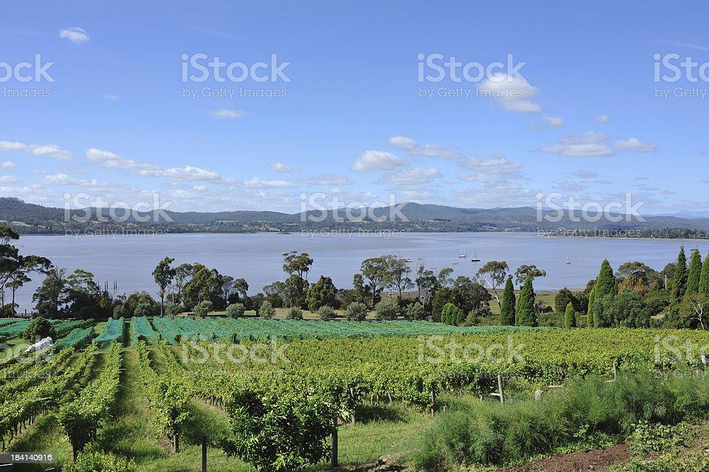 Winery in Tamar Valley, Tasmania, royalty-free stock photo