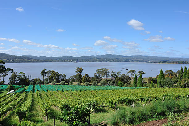 winery in tamar valley, tasmania, - tasmania stock pictures, royalty-free photos & images