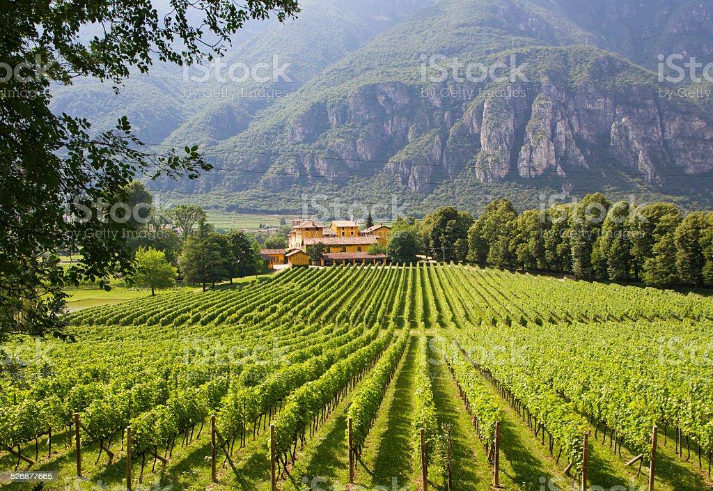Winery in Trento, Italy stock photo