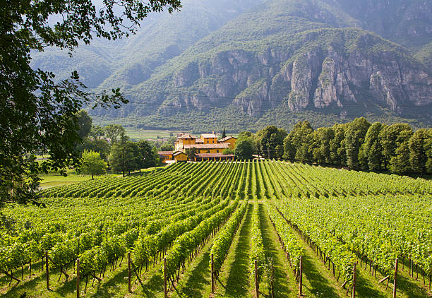 Winery in Trento, Italy A grape plantation in Trento, northern part of Italy. Wine production is one of the main industries of this area. trentino alto adige stock pictures, royalty-free photos & images