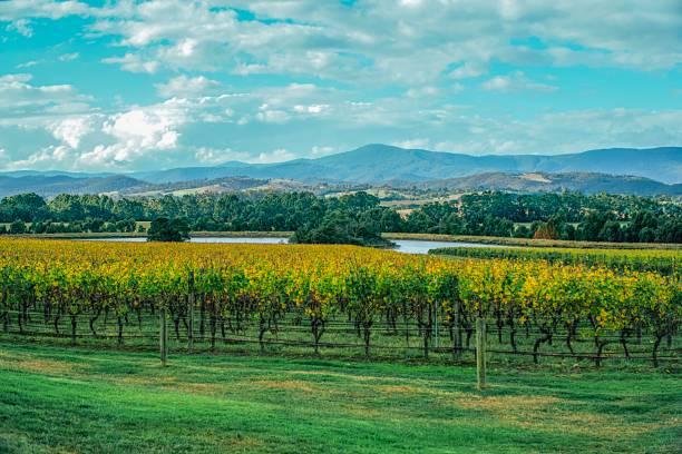 Winery in yarra valley in Australia stock photo