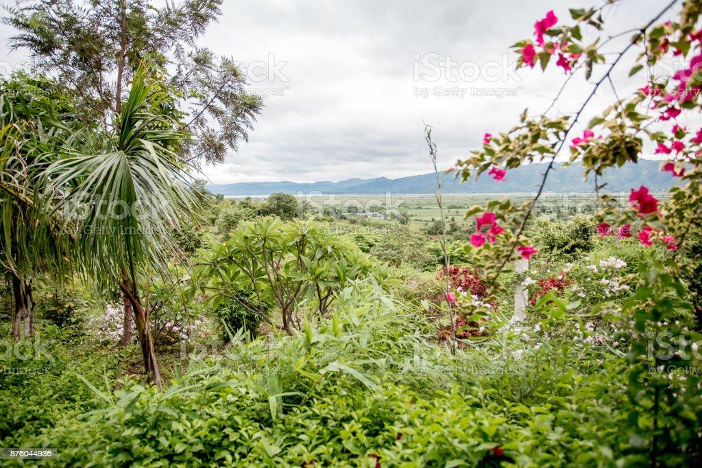 Producent landschap foto