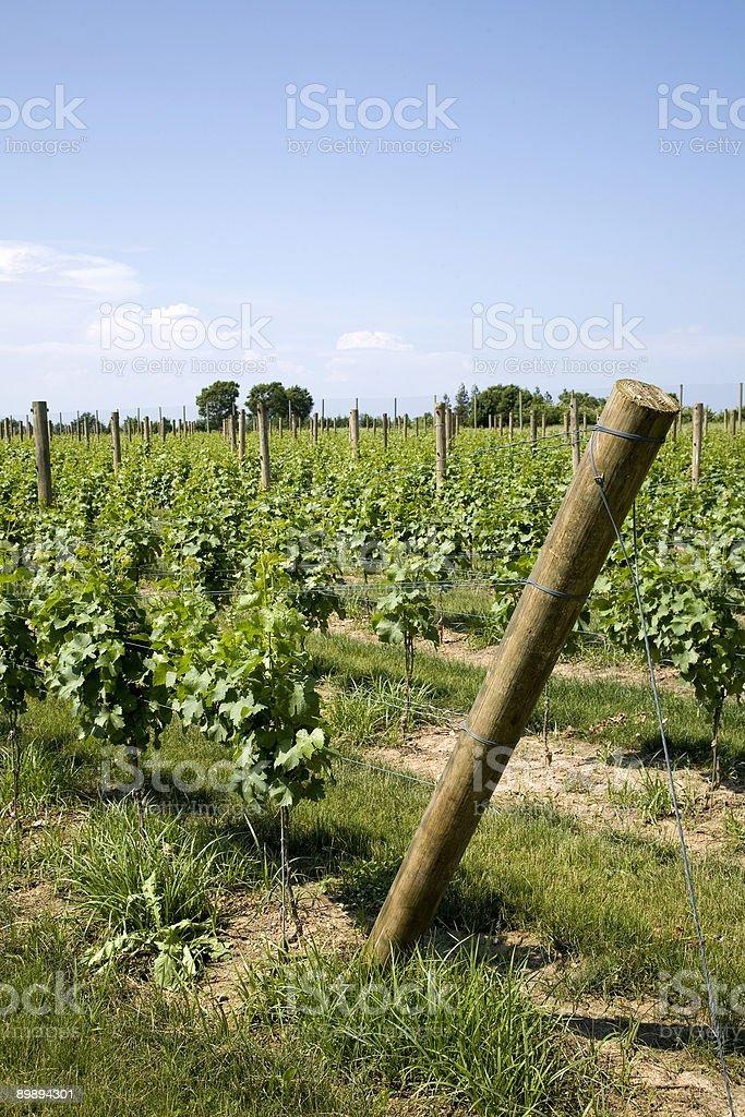 Winery on Long Island royalty-free stock photo