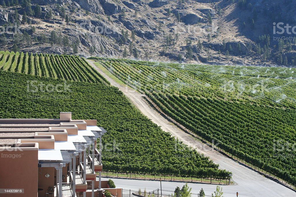 winery royalty-free stock photo