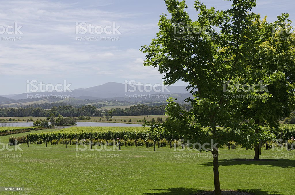 Winery view royalty-free stock photo