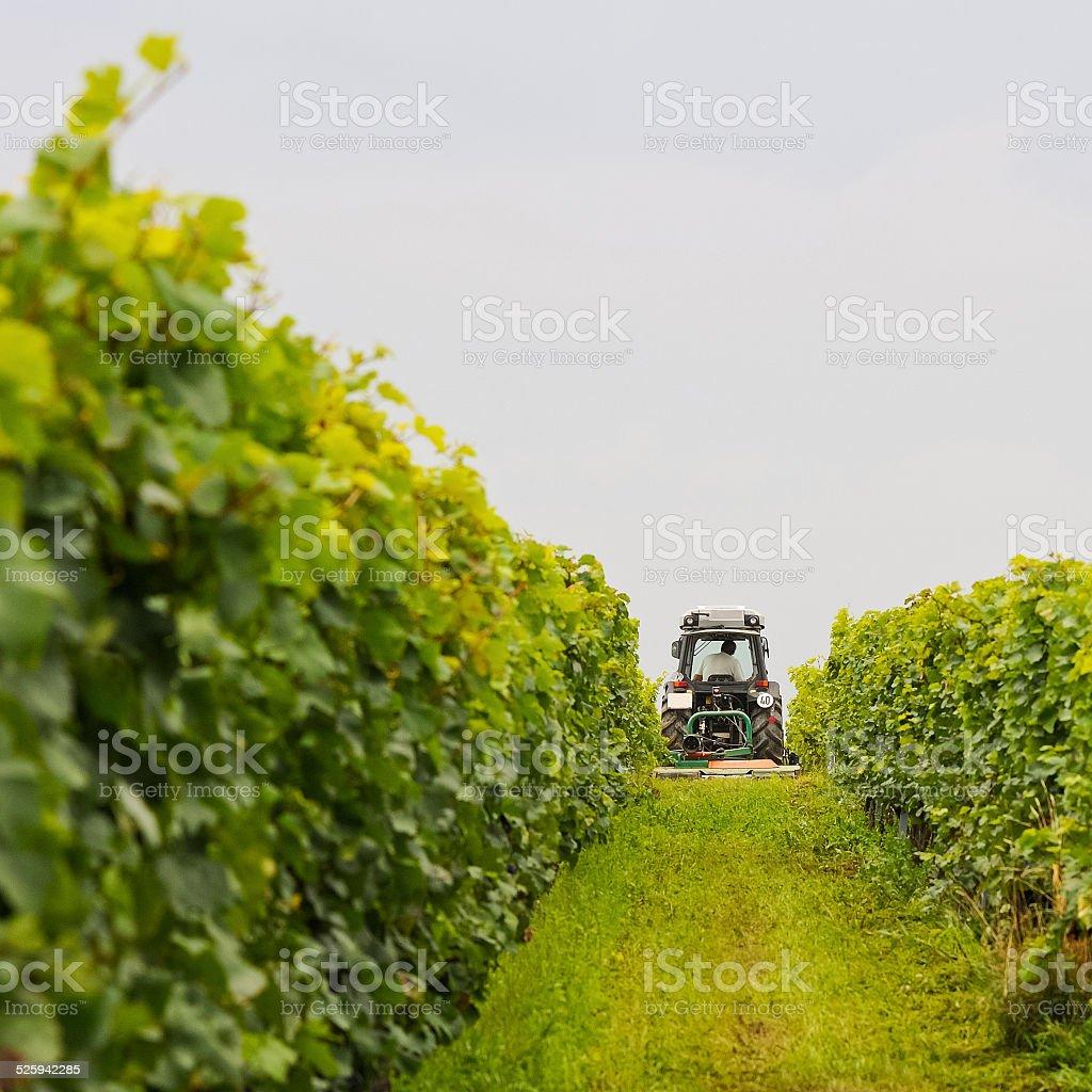 Weingut arbeitet mit Traktor in the vineyard – Foto