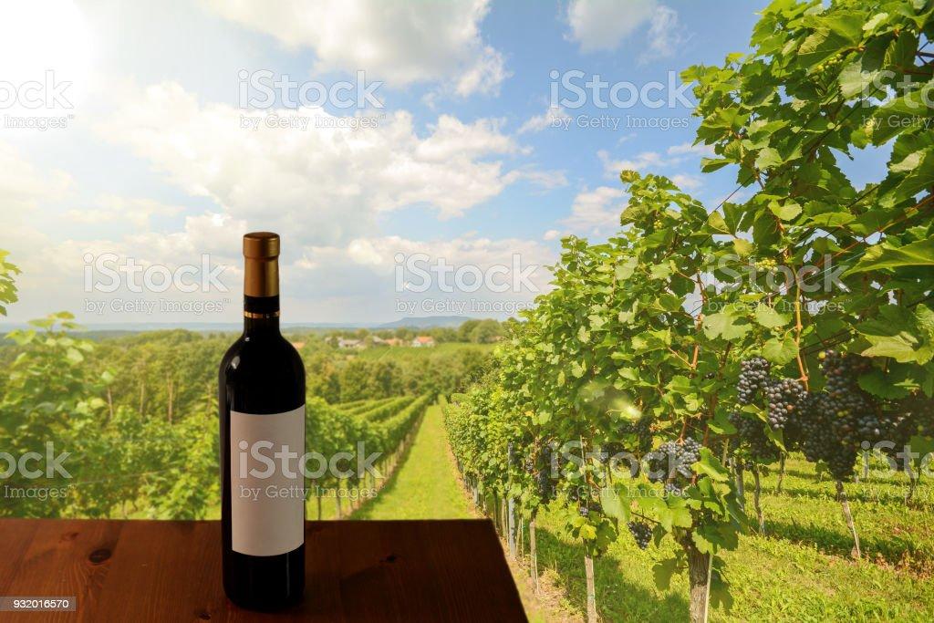 Weinproben in den Weinbergen im Bereich der Südsteiermark Wein vor der Ernte, Österreich – Foto