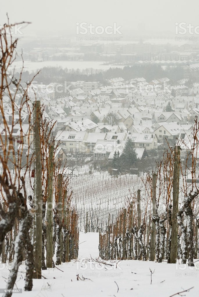 Wineyard and city in winter royalty-free stock photo