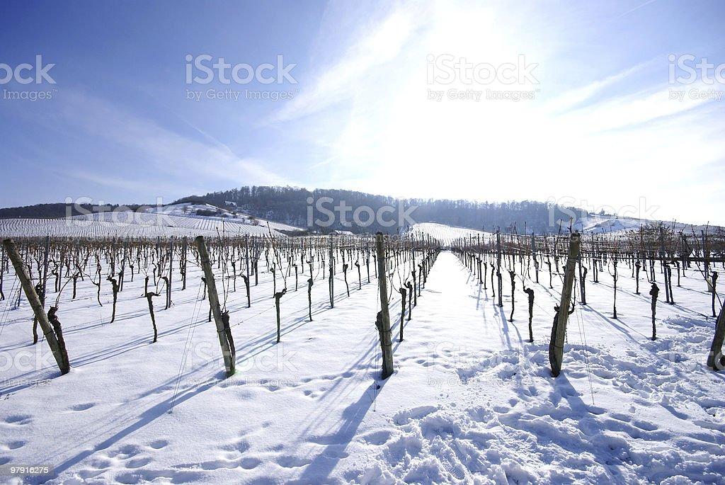 Wineyard in Winter royalty-free stock photo