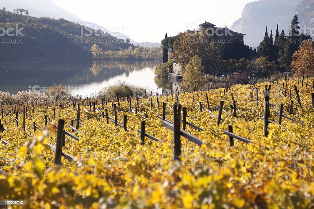 Wineyard Lago Toblino royalty-free stock photo