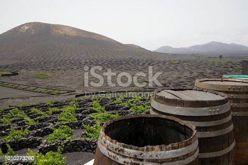 Wineyard on volcanic Island of Lanzarote