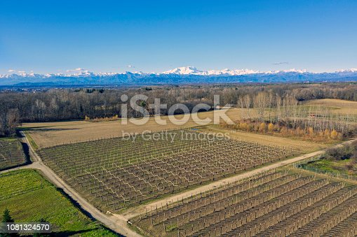 wineyard in winter. Are visible the alps and Monte Rosa, the second highest mountain of the Alps