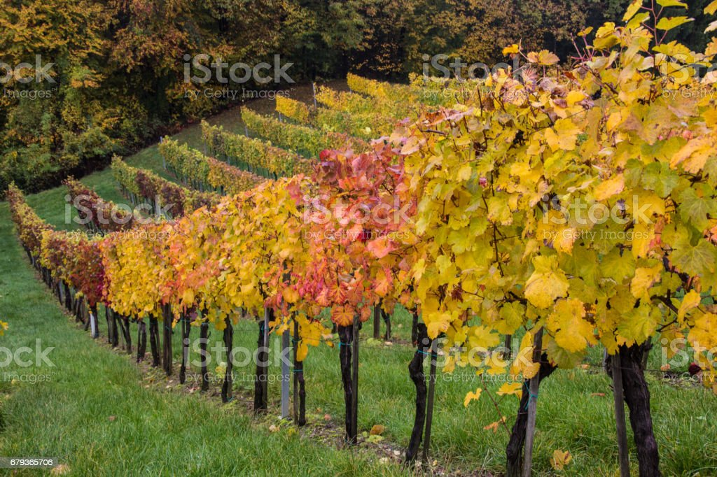 Wineyards in Styria, Austria royalty-free stock photo