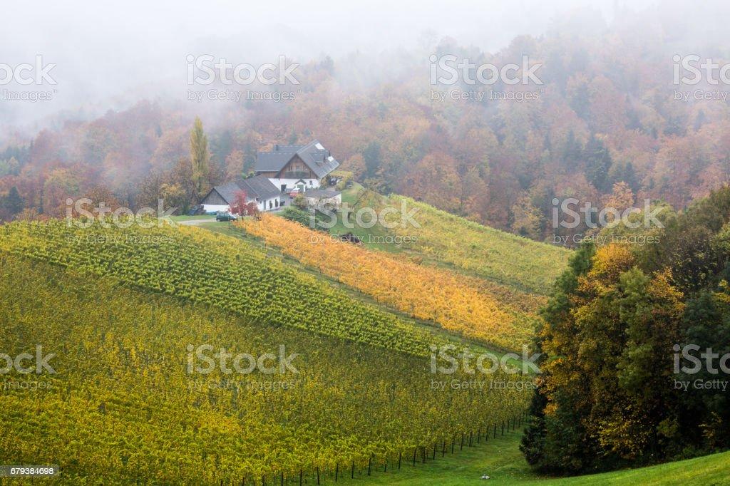 Wineyards in Styria, Austria royalty-free stock photo