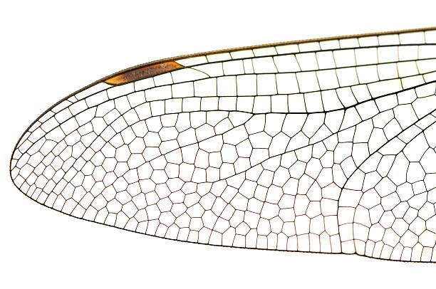 Wing dragonfly close up picture id541859568?b=1&k=6&m=541859568&s=612x612&w=0&h=5r kbphimtxw2ewurnj 6agcdfxuq5obcq9qgde07dk=