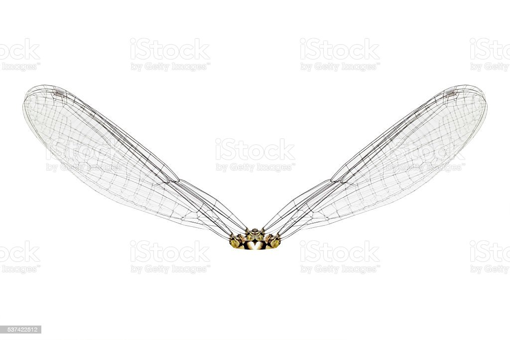 Wing dragonfly isolated on white background stock photo