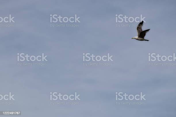 Photo of wing spread flying seagull bird in sky. background. copy space