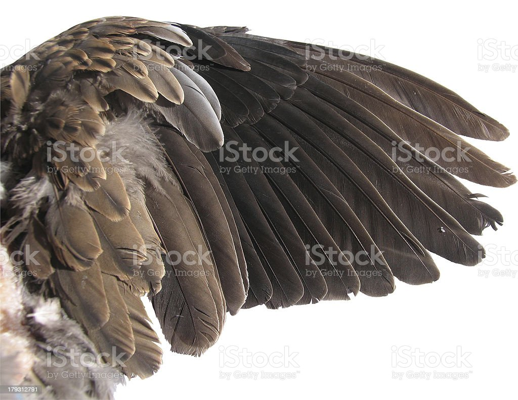 Wing with clipping path royalty-free stock photo