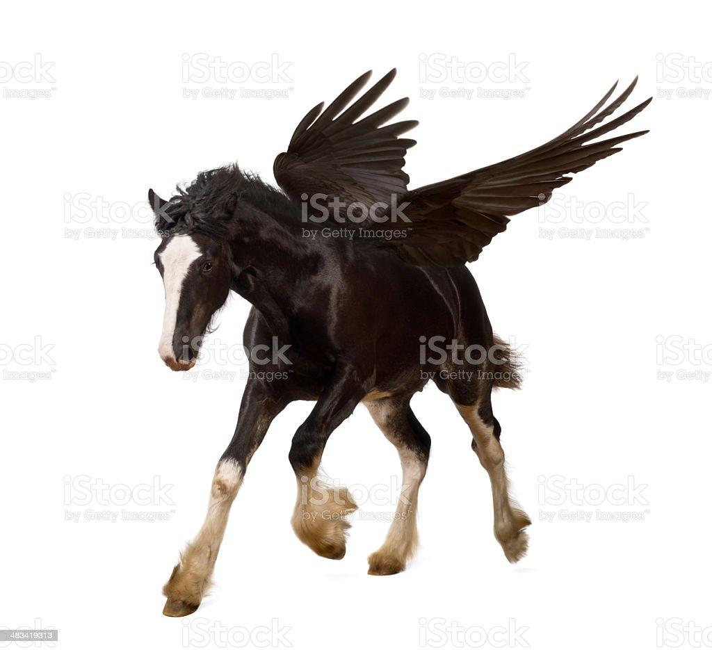 Winged stallion (Pegasus) galloping stock photo