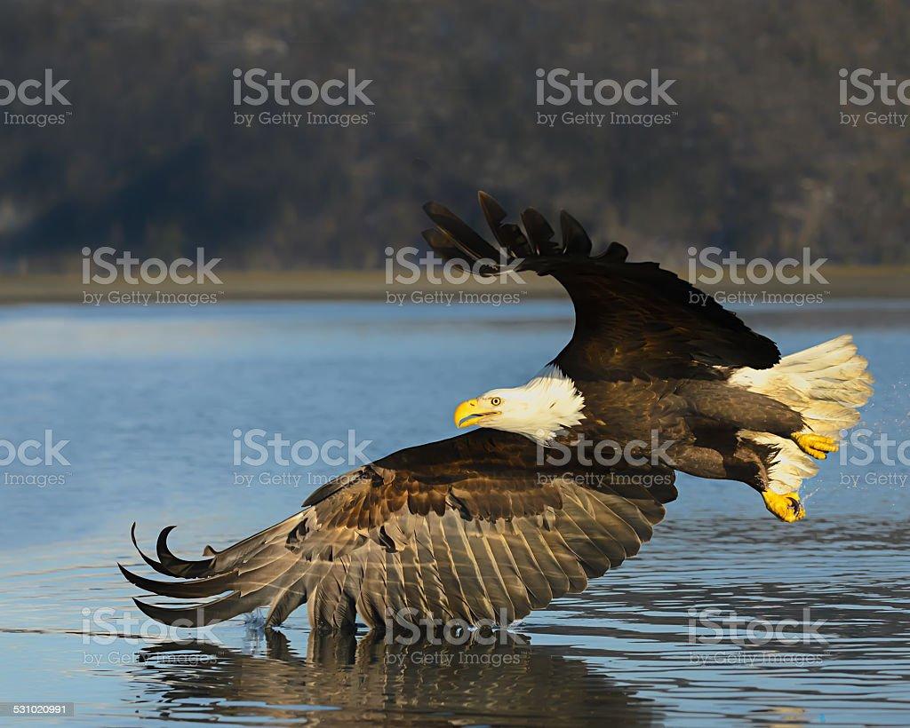 Winged Water foto