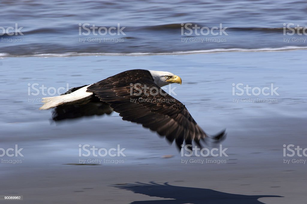 Wings in Motion royalty-free stock photo