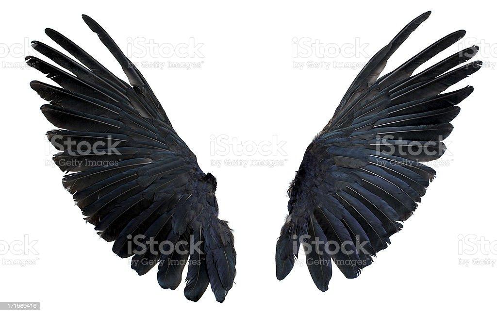 Wings isolada no branco - Foto de stock de Abrir em Leque royalty-free