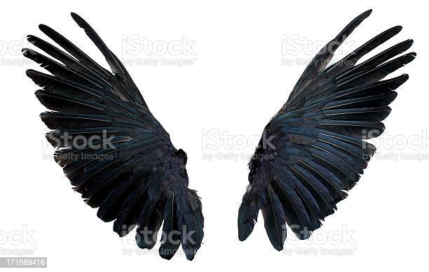 Wings isolated on white picture id171589416?b=1&k=6&m=171589416&s=612x612&h=9vlxvwxyxwojh3v69lgey kna8jzvwnf ergwaqkwvg=